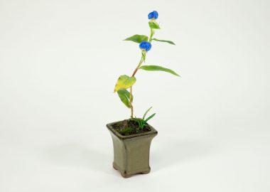 摘み花作品